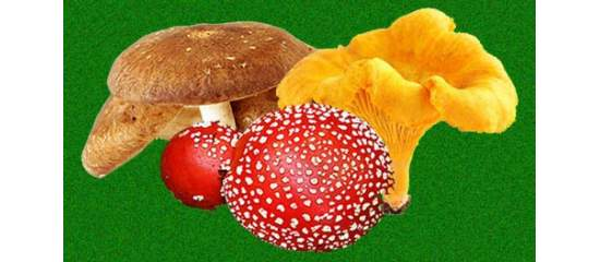 Marvellous, Mysterious Mushrooms - The Original Medicinal