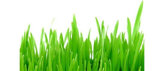 How Food Can Help Lower Bad Cholesterol - Barley Grass