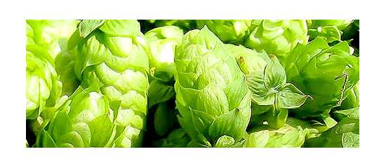 What You Don't Know About Hops Could Make You Sleepy