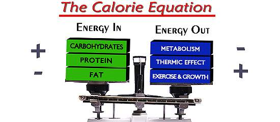 Understanding Energy Usage is Crucial to Weight Loss