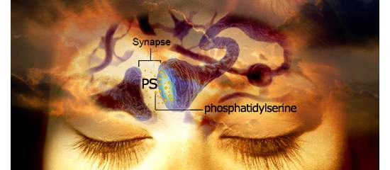 How Phosphatidylserine Improves Sleep Quality